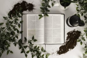Bible with leaves around it